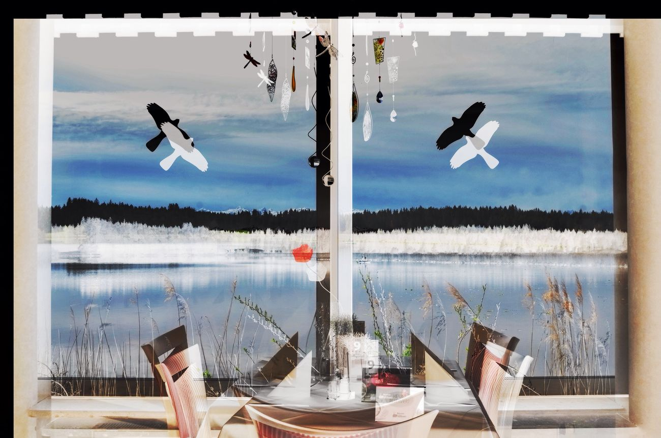 A VIEW WITH FENG SHUI Water Sky Birds Scenics Table View Lake View Sea Nature Day Paper No People Outdoors Beauty In Nature Bird  Feng Shui Allgäu Double Exposure Negative Positive Photo Art Elbsee