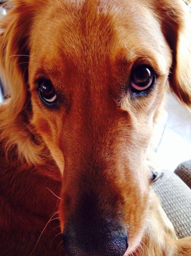 Chachi bebe LaMejorPerra I Love My Dog