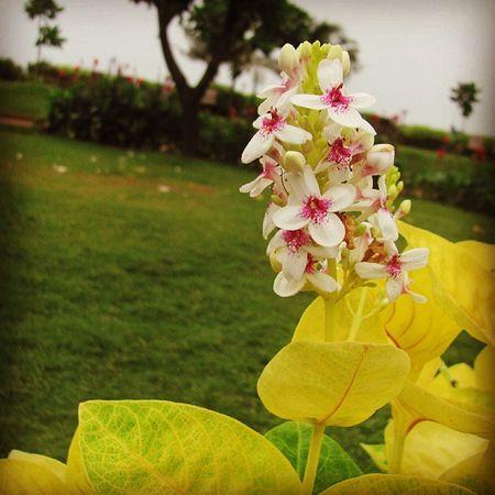 Flower JoggersPark Instawalkbandra2 Mumbai Mumbai_igers Mumbai_instagrammers Mumbailife Colour Love Camera Phonography  Like Pocoftheday Mumbai_mumbaikar