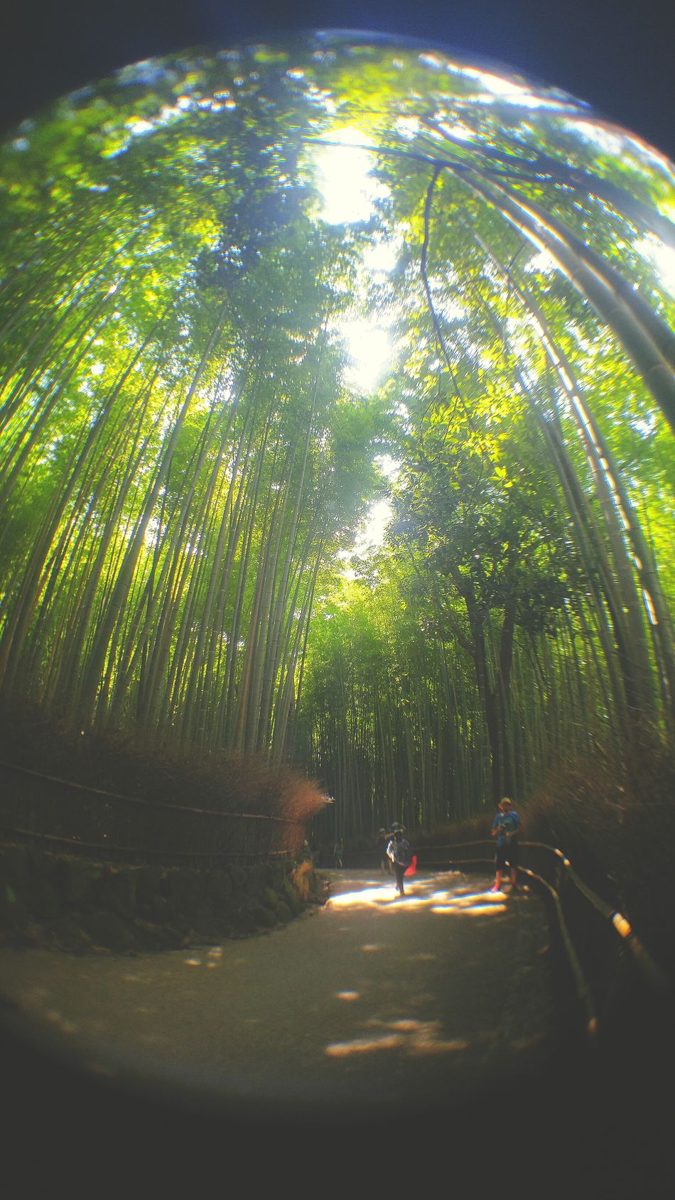 Beauty In Nature Latergram LGV10 Fish Eye Fish Eye Lens Landscape_photography Smartphonephotography Bamboo Forest EyeEm Best Shots Sunlight Travel Destinations 京都 Bamboo Grove Afterlight Outdoors EyeEm Gallery Travel Photography Tranquility Being A Tourist Latepost Japan Photography Bamboo Melancholic Landscapes From My Point Of View Tourist Destination