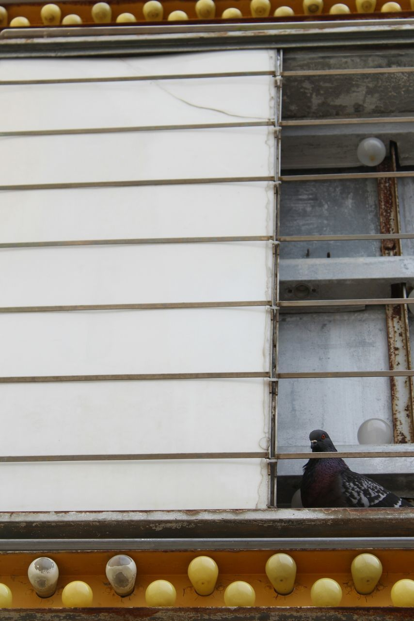 Low Angle View Of Pigeon Perching By Metal