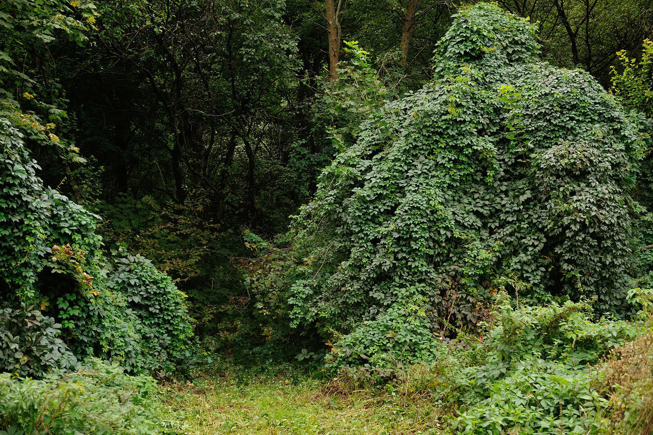 Background Beauty In Nature Curling Day Flora Forest Grass Green Green Color Leaf Natural Nature Nature Outdoors Park Plant Tree Trees Tropical Weaved Wild