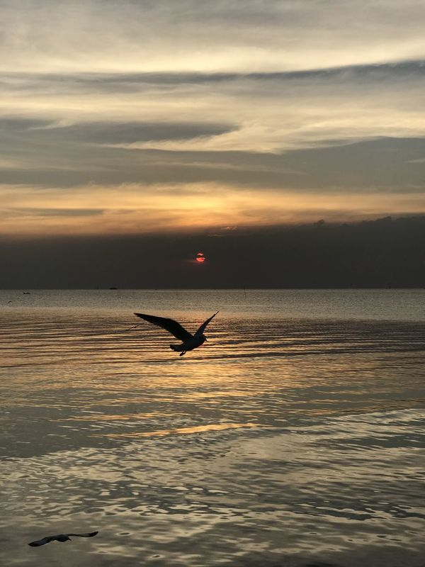 Adventure Beauty In Nature Cloud - Sky Day Horizon Over Water Nature One Person Outdoors People Scenics Sea Silhouette Sky Sunset Water
