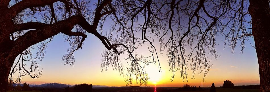Sunset Silhouette No People Outdoors Nature Sky Beauty In Nature Scenics Tree Day Branch Branches And Sky Panoramic Panoramic Landscape Panoramashot Panoramic Photography Panorama