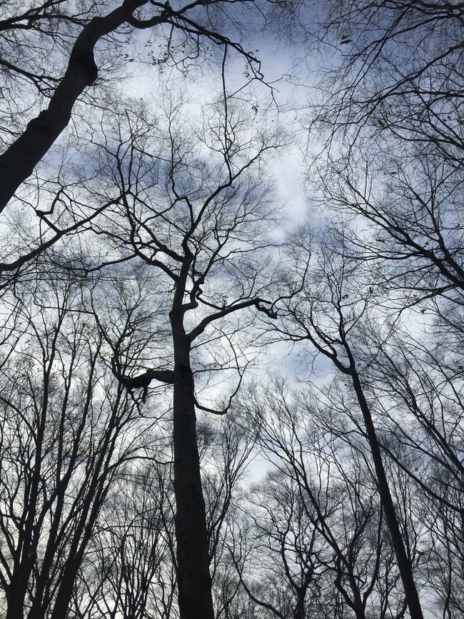 Winter sky Winter Forest In The Forest Sky Landscape Landscape_Collection