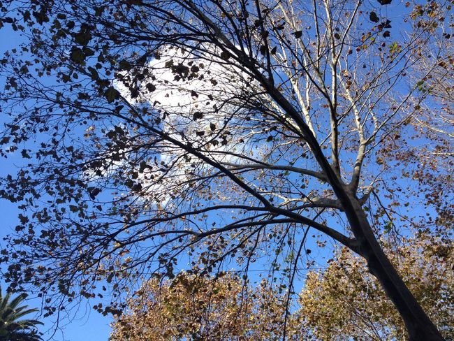 Under the tree Bare Tree Beauty In Nature Blue Branch Day Growth High Section Low Angle View Nature Outdoors Sky Sky And Clouds Sunny Tranquil Scene Tranquility Tree Tree Tree Trunk