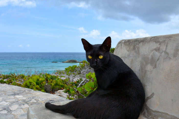 Black cat sitting on the stone bench at the Circle of Hope on Middle Caicos of Turks and Caicos Islands Black Cat Circle Of Hope Dragon Cay Middle Caicos Turks And Caicos Turks And Caicos Islands Animal Themes Beauty In Nature Black Color Cat Close-up Cloud - Sky Day Domestic Cat Feline Horizon Over Water Nature No People Ocean One Animal Outdoors Pets Sea Sitting Sky