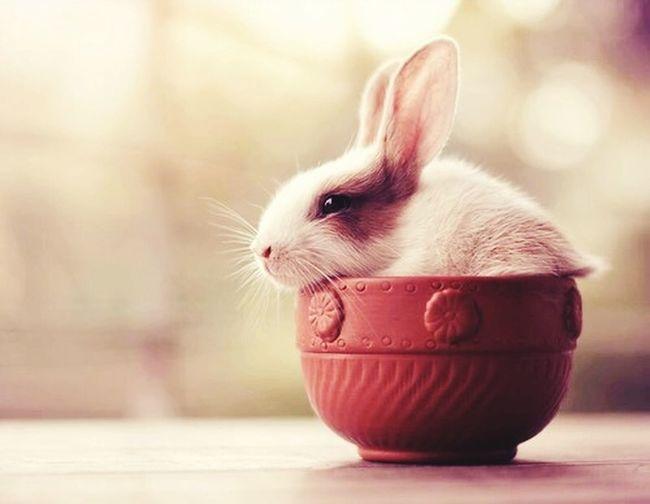 Mr Rabbit My Rabbit Rabbit ❤️ Cute Pets cupa rabbit ?