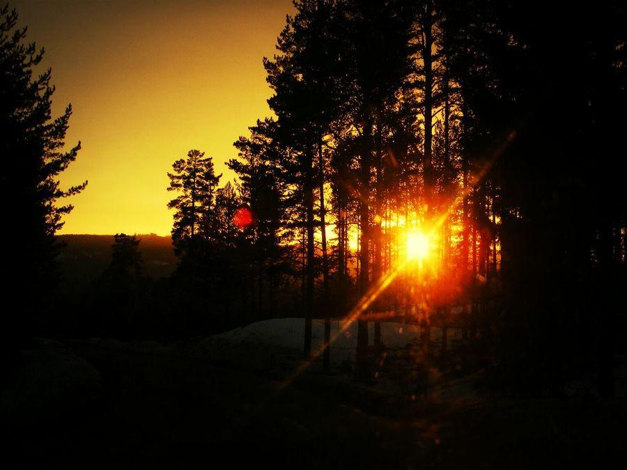 Life is so unfair sometimes. Sun Set Tree Thinking