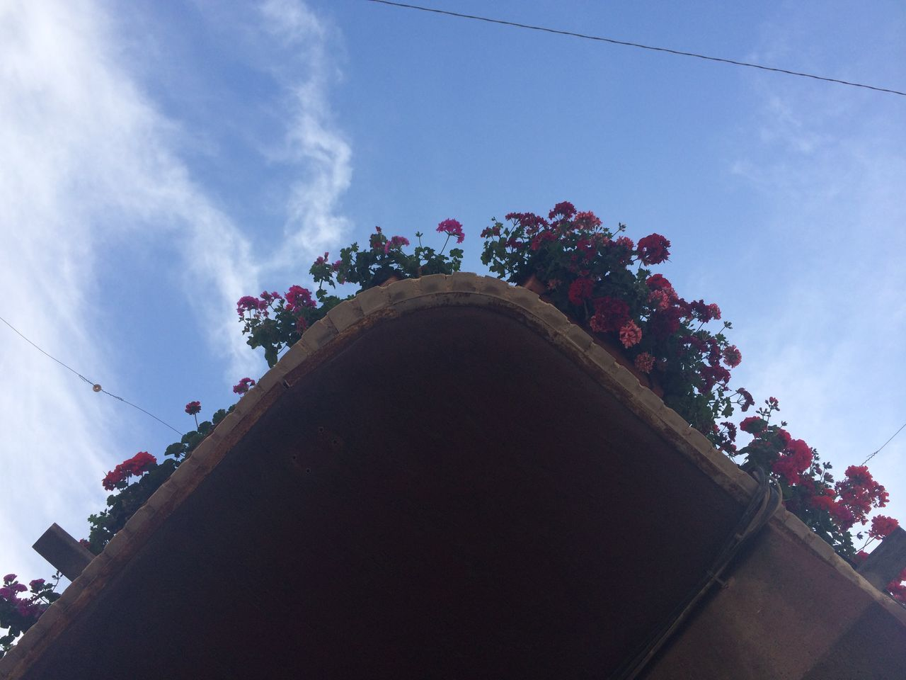 low angle view, sky, day, outdoors, cloud - sky, no people, flower, multi colored, nature, architecture, building exterior