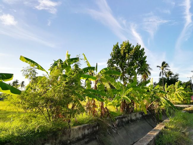 Tree Growth Cloud - Sky Nature No People Sky Outdoors Plant Day Beauty In Nature Water Greenhouse Freshness