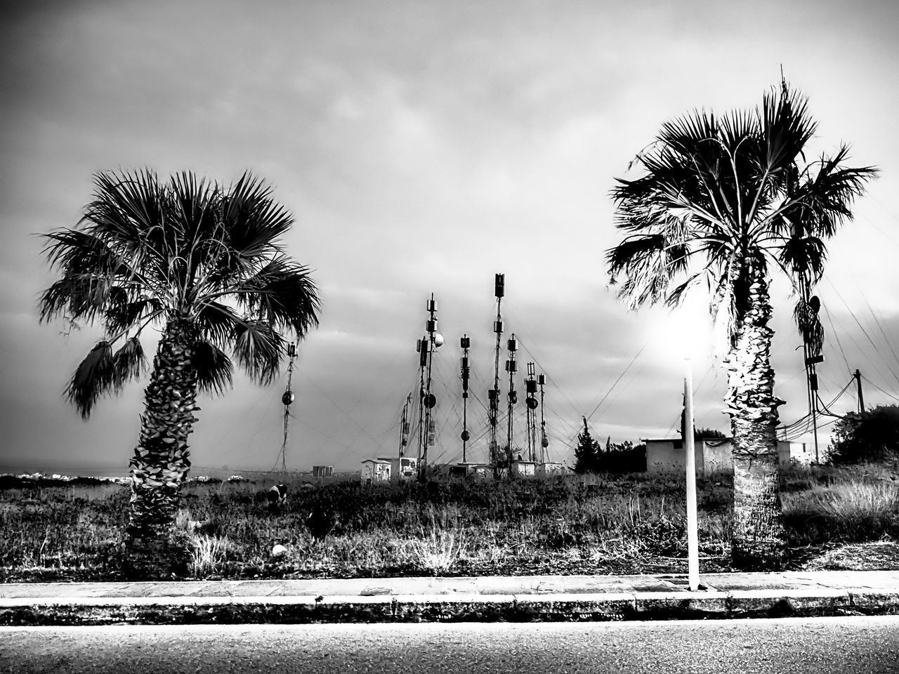palm tree, tree, sky, no people, outdoors, built structure, day, nature