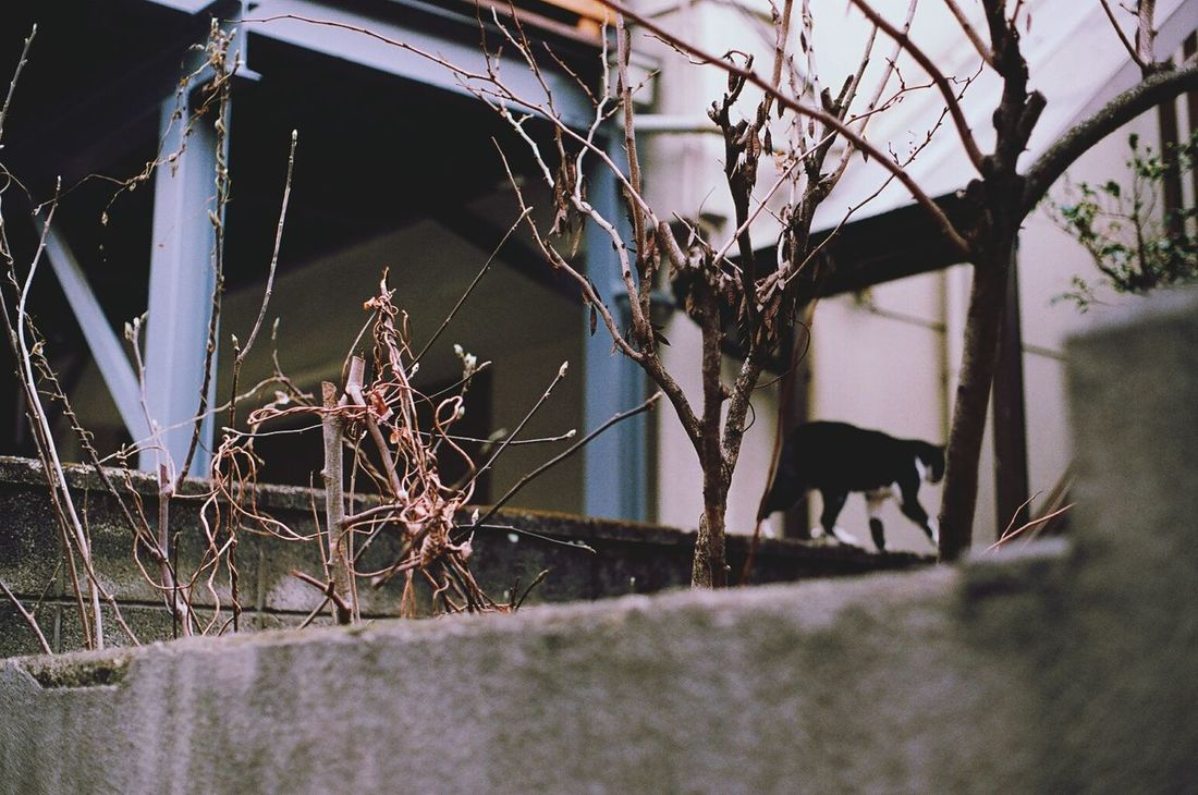 Tokyo Street 35mm Film Cat Tokyo