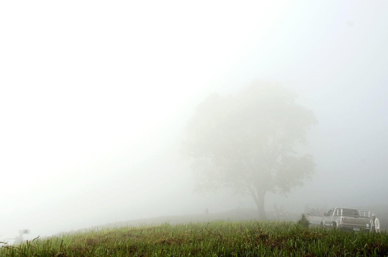 Foggy Morning Fog Foggy Travel Phulomlo Thailand Tranquility Foggy Landscape Travelling Thailand Tree Misty Nature Minimal Minimalism ภูลมโล
