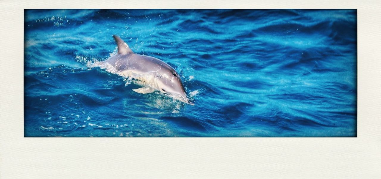 Dolphin safari Dolphin Dolphins Dolphin Watching  Dolphin Fun Dolphinlover Dolphinswim Dolphinwatch Dolphines Dolphin In Sea Dolphin Swimming Dolphin Safari Dolphin In Water Dolphins Swimming Dolphins Playing Dolphinwatching Dolphinwatchingplace Dolphins In The Bay