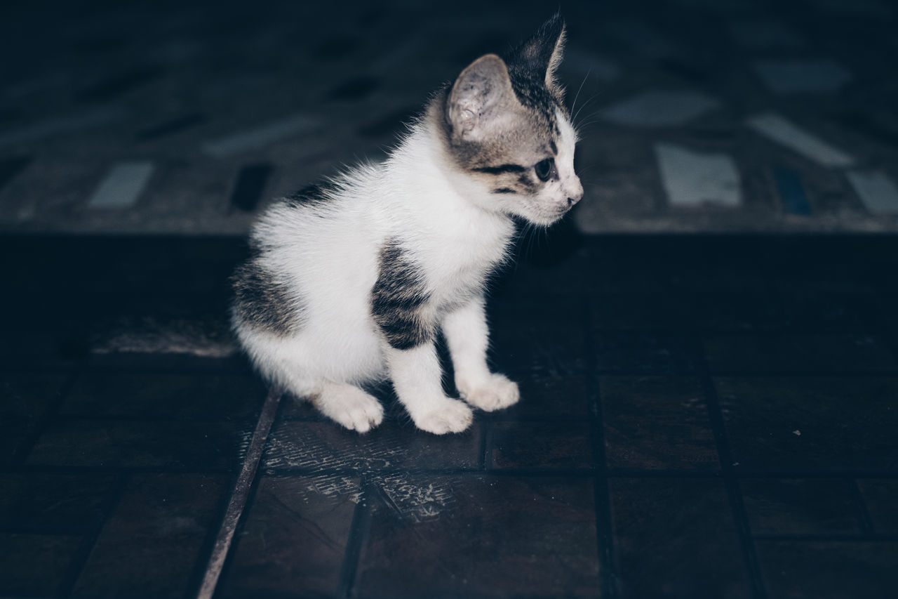 Adorable Animal Animal Themes Baby Cat Cuddly Cute Day Development Domestic Animals Domestic Cat EyeEm Diversity Feline Fluffy Full Length Fur Growing Kitty Learning Mammal One Animal Pets Portrait Sitting Veterinary Break The Mold