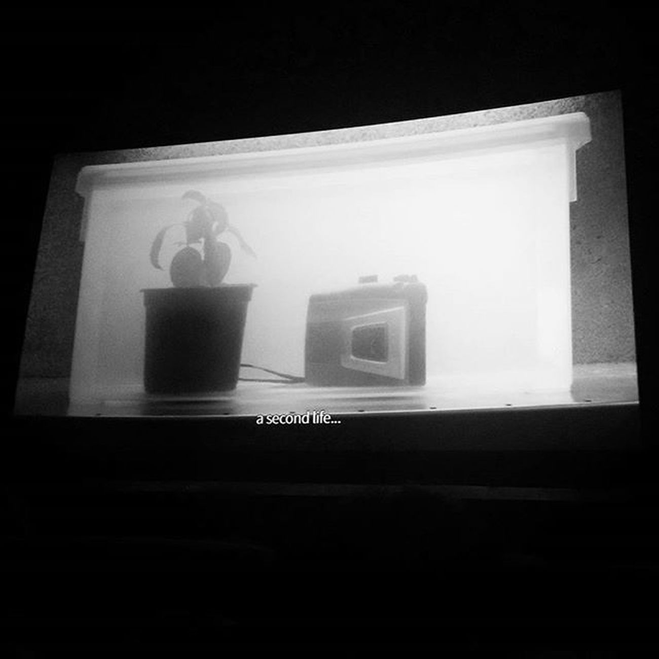 Cinema Music Recorder Plant Tunisia IgersTunisia Jcc2015 عيشة أخرى ... بالموسيقى :) و لله اﻷمر من قبل و من بعد :)