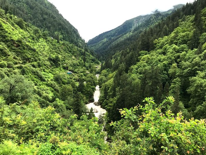 Been There. Beauty In Nature Nature Forest Lush Foliage Mountain Range Mountain