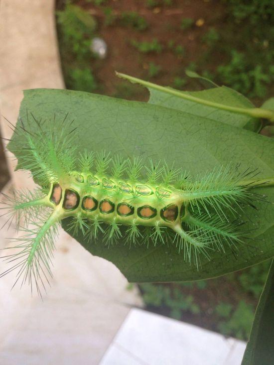 Maximum Closeness Caterpillar Natural Pattern Natural Symmetry First Eyeem Photo