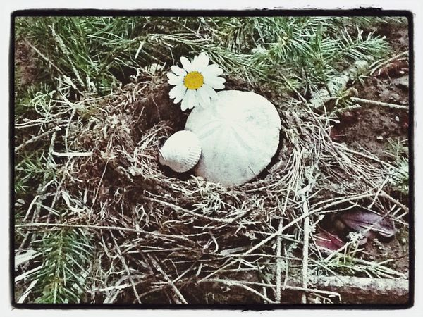 Birds Nest Nature Recycled Homes The Week On EyeEm