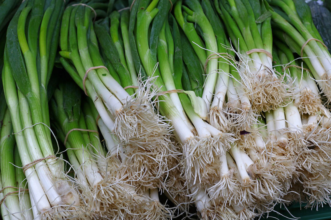 Fresh fgreen new spring bunch onions on retail market stall display Bunch Close-up Day Farmers Market Farming Food Food And Drink For Sale Freshness Green Green Color Green Onion Greenery Healthy Healthy Eating Market Market Stall Nutrition Onion Organic Outdoors Retail  Spring Onion Vegetable Vitamins