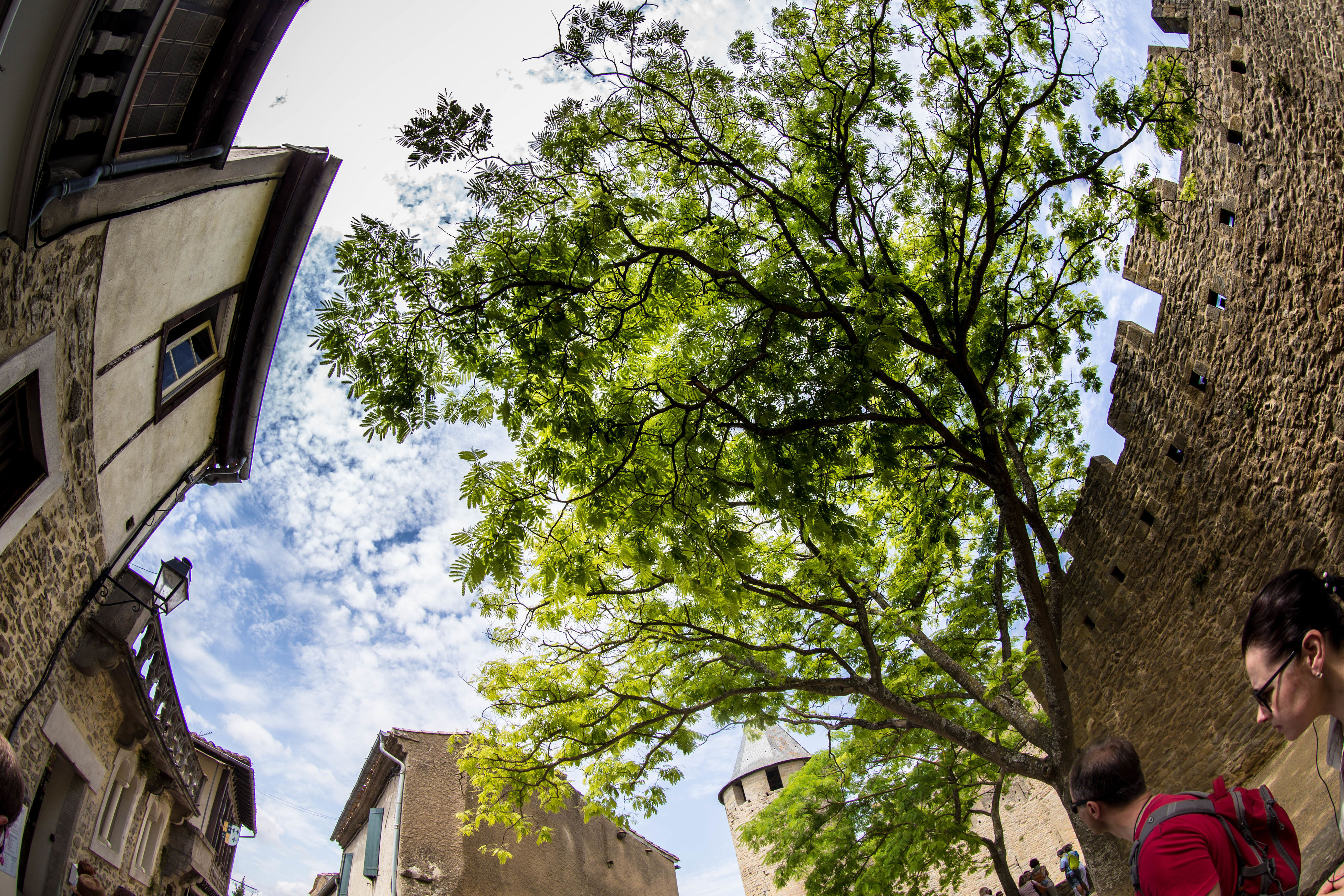 architecture, built structure, low angle view, building exterior, city, residential building, residential structure, building, tree, sky, window, growth, branch, tall - high, day, office building, city life, outdoors, cloud - sky, green color, architectural feature, no people