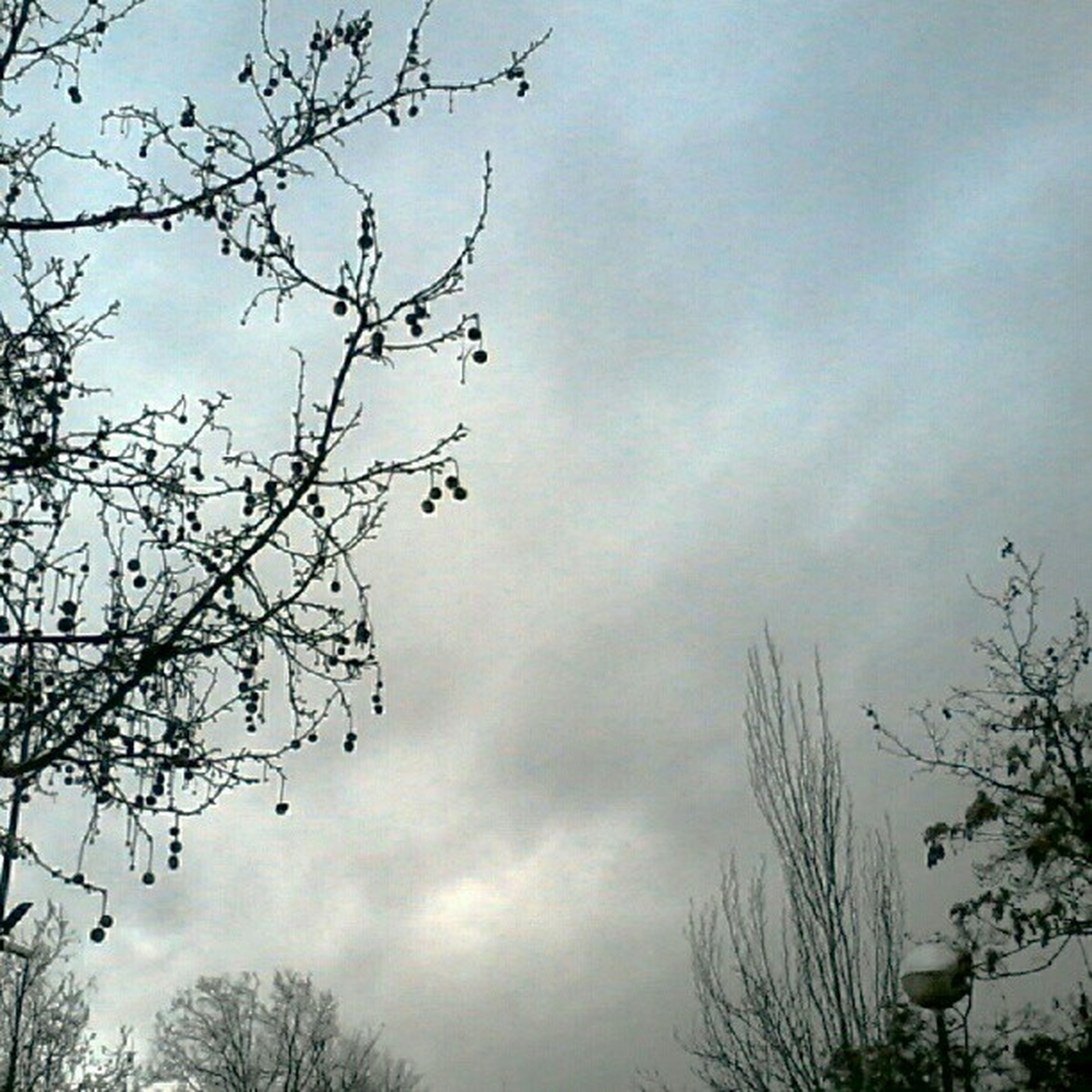 sky, low angle view, tree, branch, cloud - sky, bare tree, tranquility, nature, beauty in nature, cloudy, scenics, growth, silhouette, tranquil scene, cloud, outdoors, overcast, weather, no people, dusk