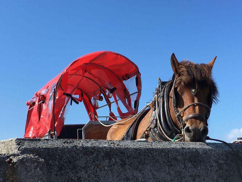 Inis Oírr Araninseln Aran Islands Horse Journey Ireland🍀 Ireland Inisheer Westcoastireland Hackney Cabs Pferd Pferde Kutsche Irland
