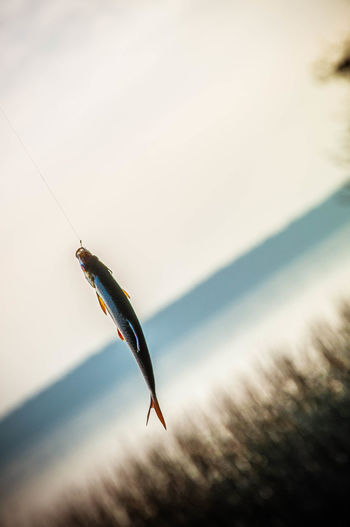 Fish on the hook Fish On The Hook Fishing Fishing Rod Lazzy Day Fisherman Travel Mazury Fishing Life Nature Wild Rod Peaceful Fishing Spot Good Time Keep Calm Chilling Day Off Travellife Fish Ryba Capture The Moment Lazzyday Creative Perspective Photography Perspectives
