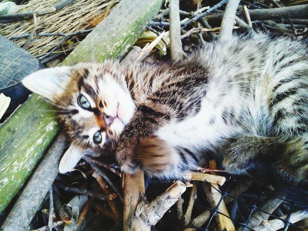 Kitty Tiger Taking Photos Amazing Eyes