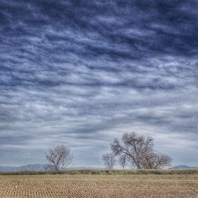 Iamthehighway Barcelona Mollet Landscape Ruralphotography Catalunya Catalonia Domfernandez Trees SPAIN IPhone4s IPhoneography Paisaje Sky