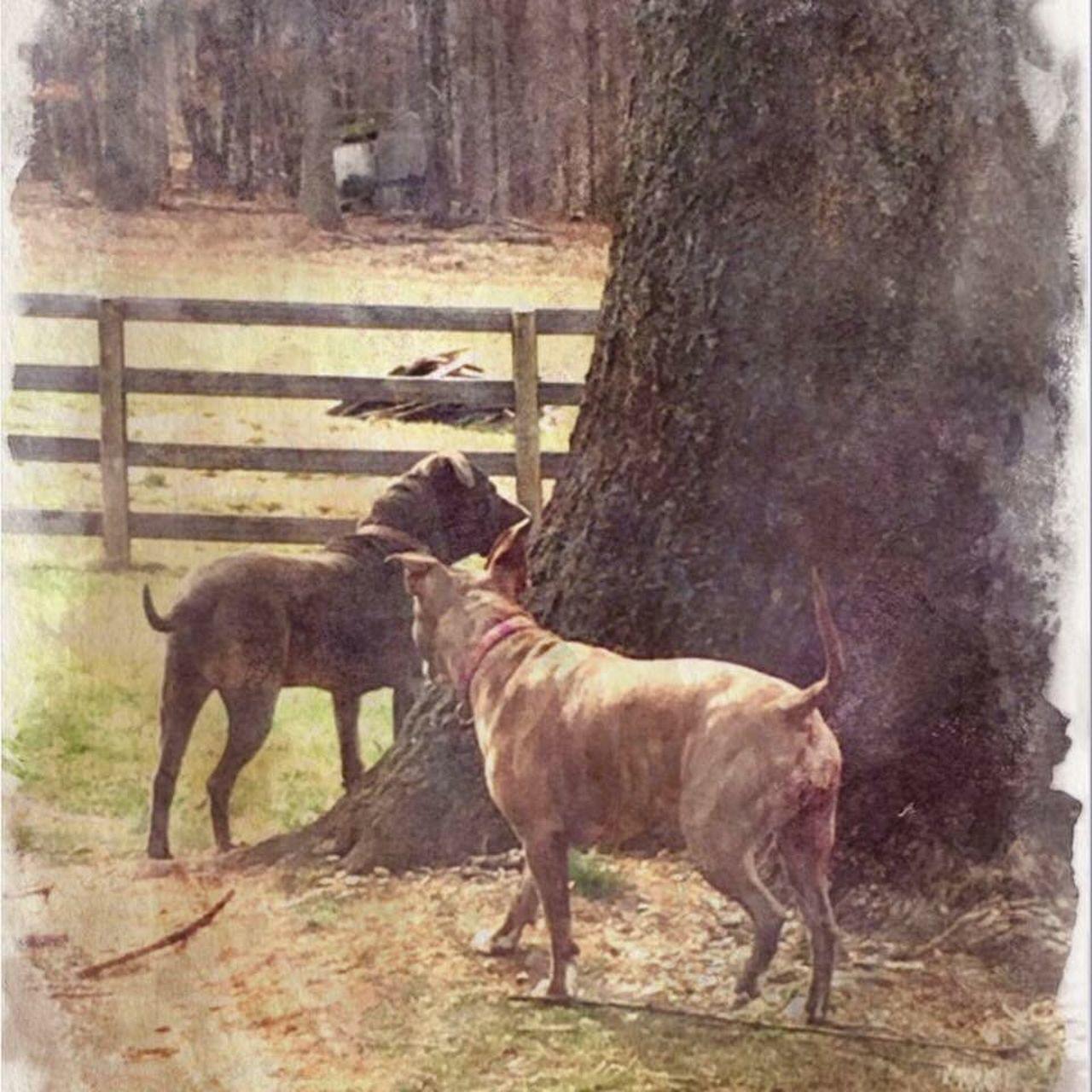 Pitbullrescue Animal Themes Dog Love
