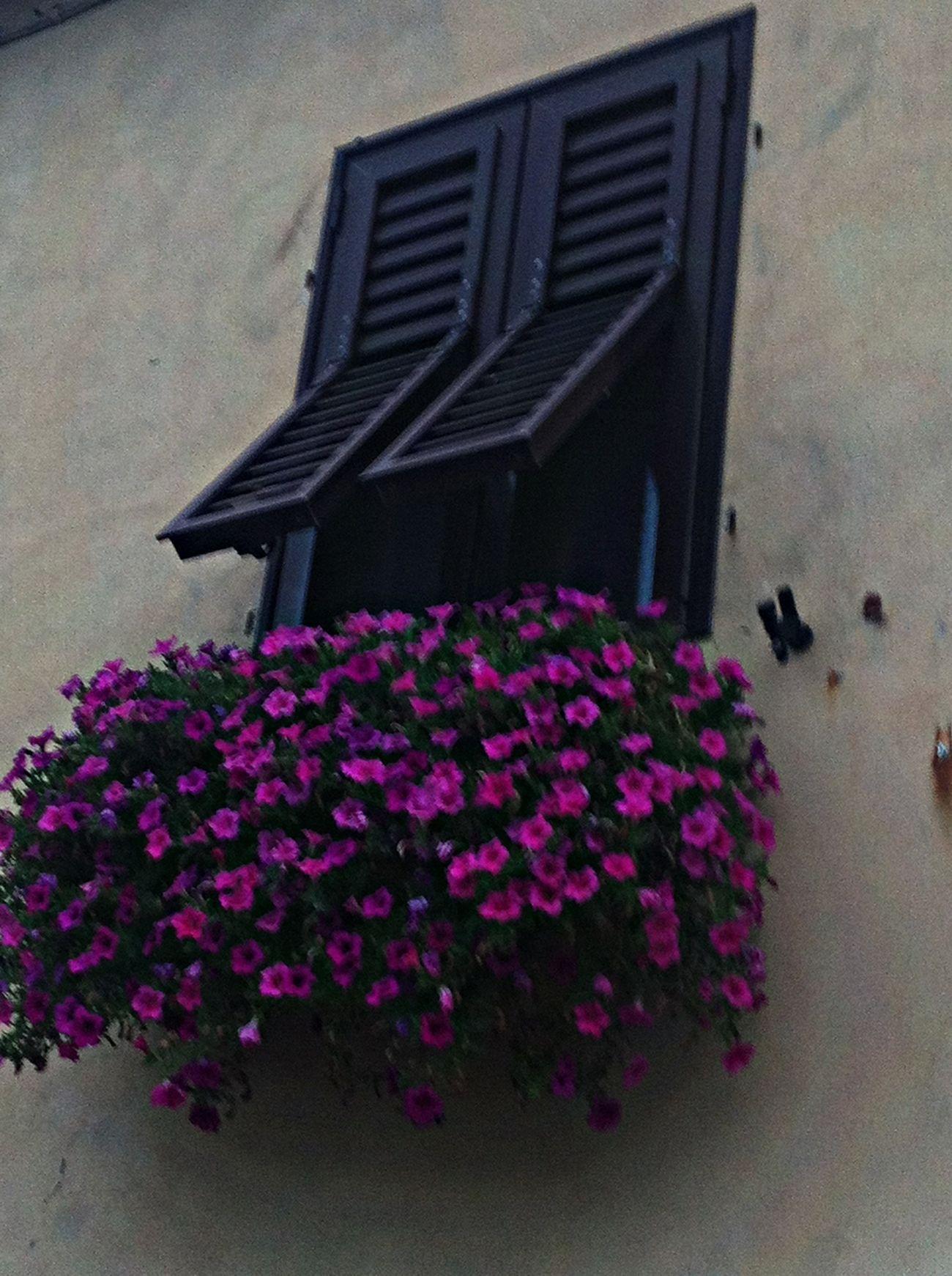 Bestoftheday EyeEmBestPics Flowers