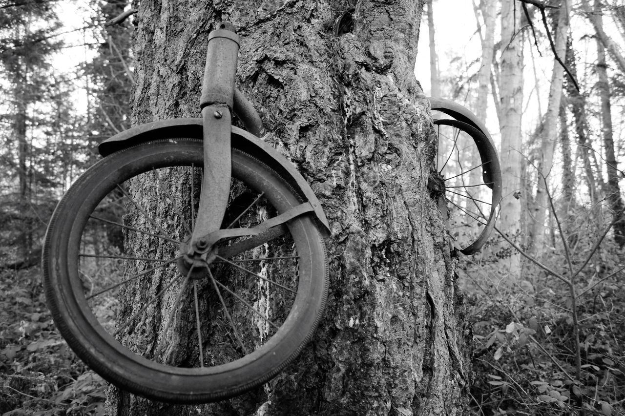 Low Angle View Of Abandoned Cycle Through Tree Trunk
