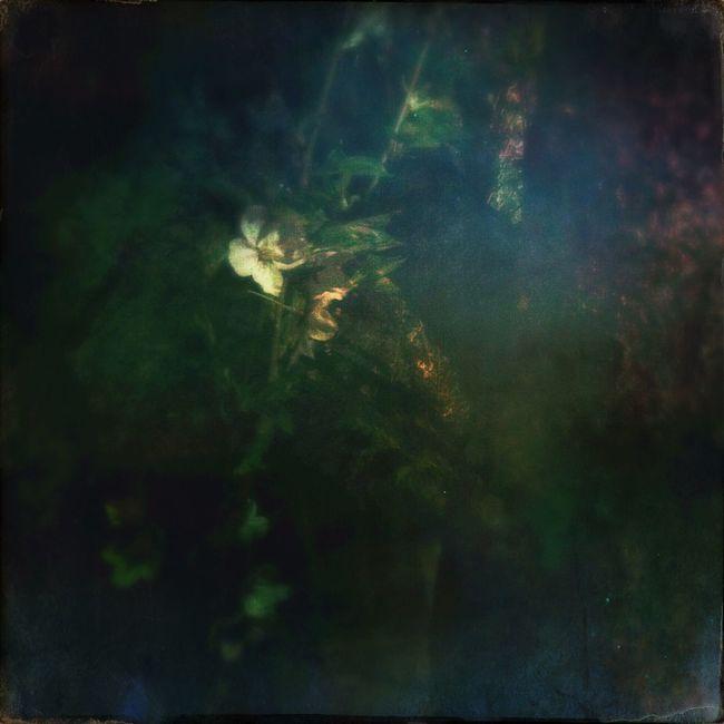 cherryblossum at night Beatiful Japanesque Painterly Oggl Hipstamatic Flowers Nature