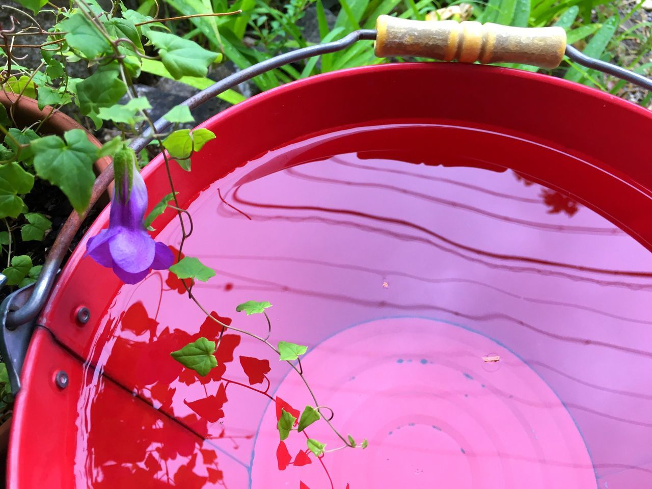 growth, plant, leaf, day, pink color, outdoors, front or back yard, no people, nature, red, watering can, close-up, freshness, tree, fragility