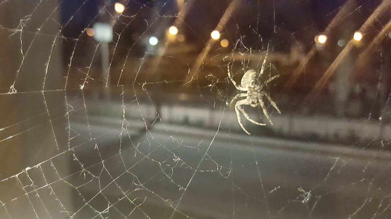 Backgrounds Illuminated Indoors  Windshield Spider Web Close-up No People Night Spider Animal Gruselig Halloween Spinnennetz Spinnweben Spinne Nature Shock