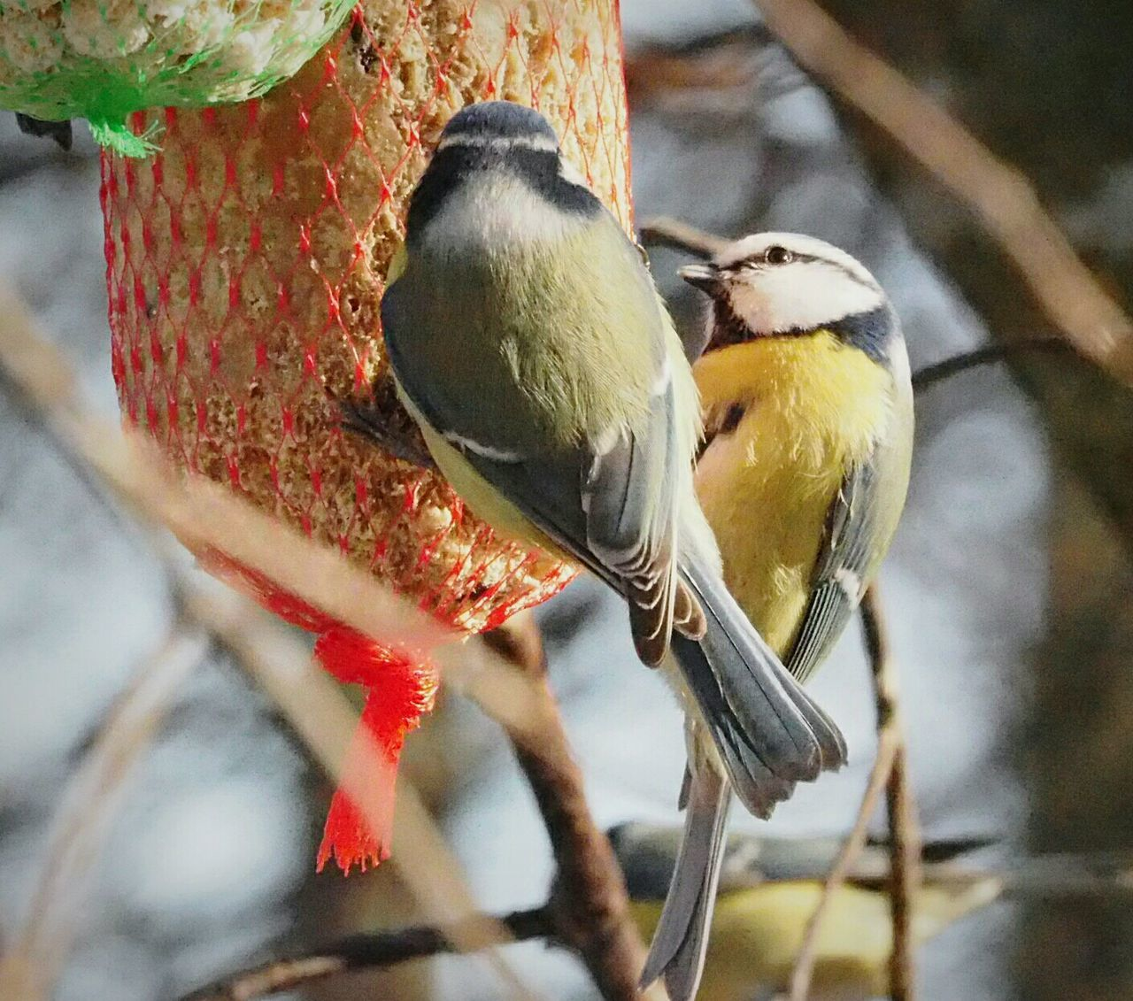 Bird Animal Themes Animals In The Wild Focus On Foreground Animal Wildlife Close-up Nature Food Tree Beauty In Nature Winter Nature Outside Animals In The Wild Tree Birdhouse Bird On A Branch Bird Feeder Winter Time Nature Bird Eating