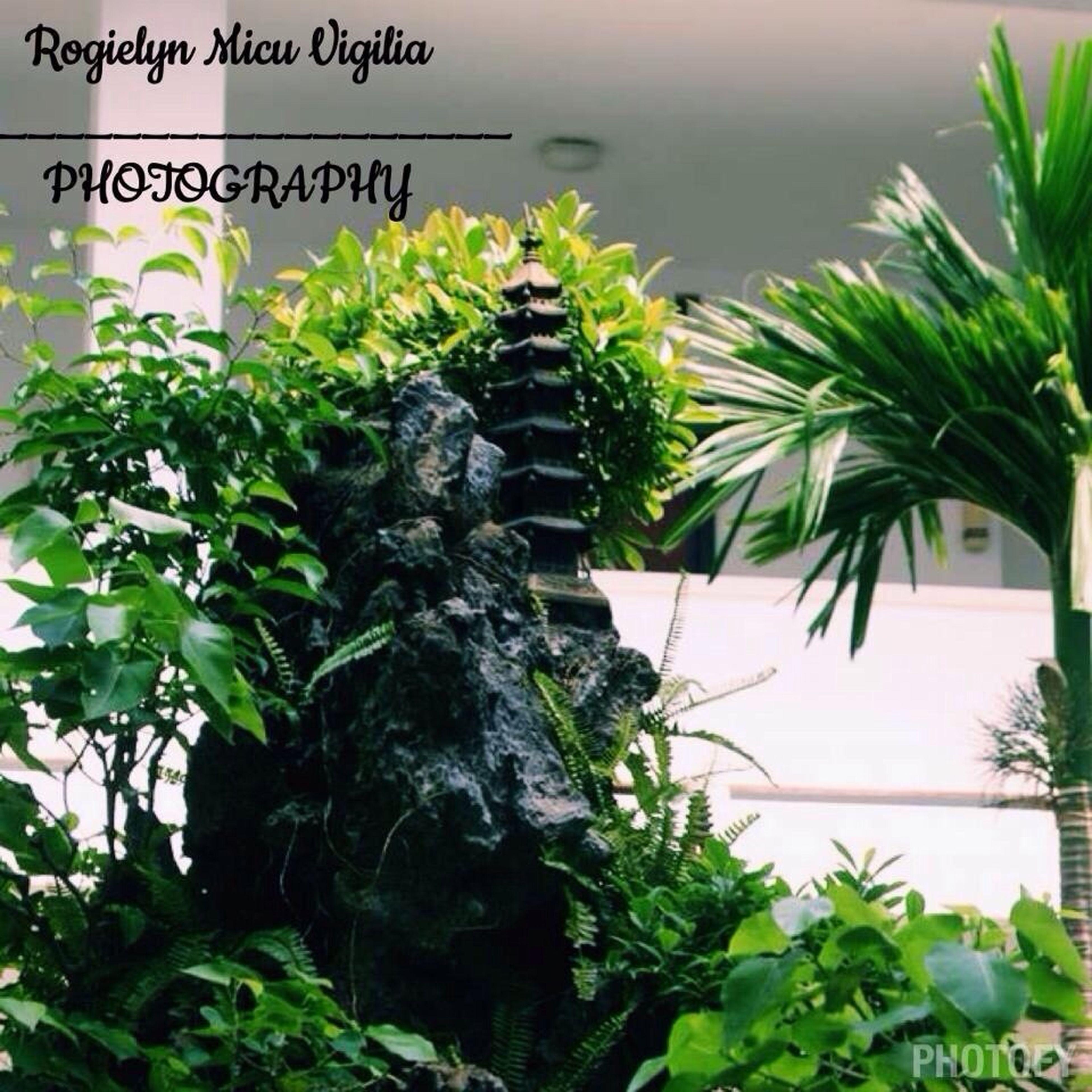 I love Photography
