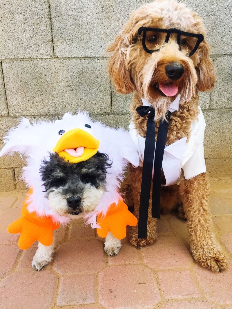 Dogs Halloween Dogs In Costumes Goldendoodle Funny