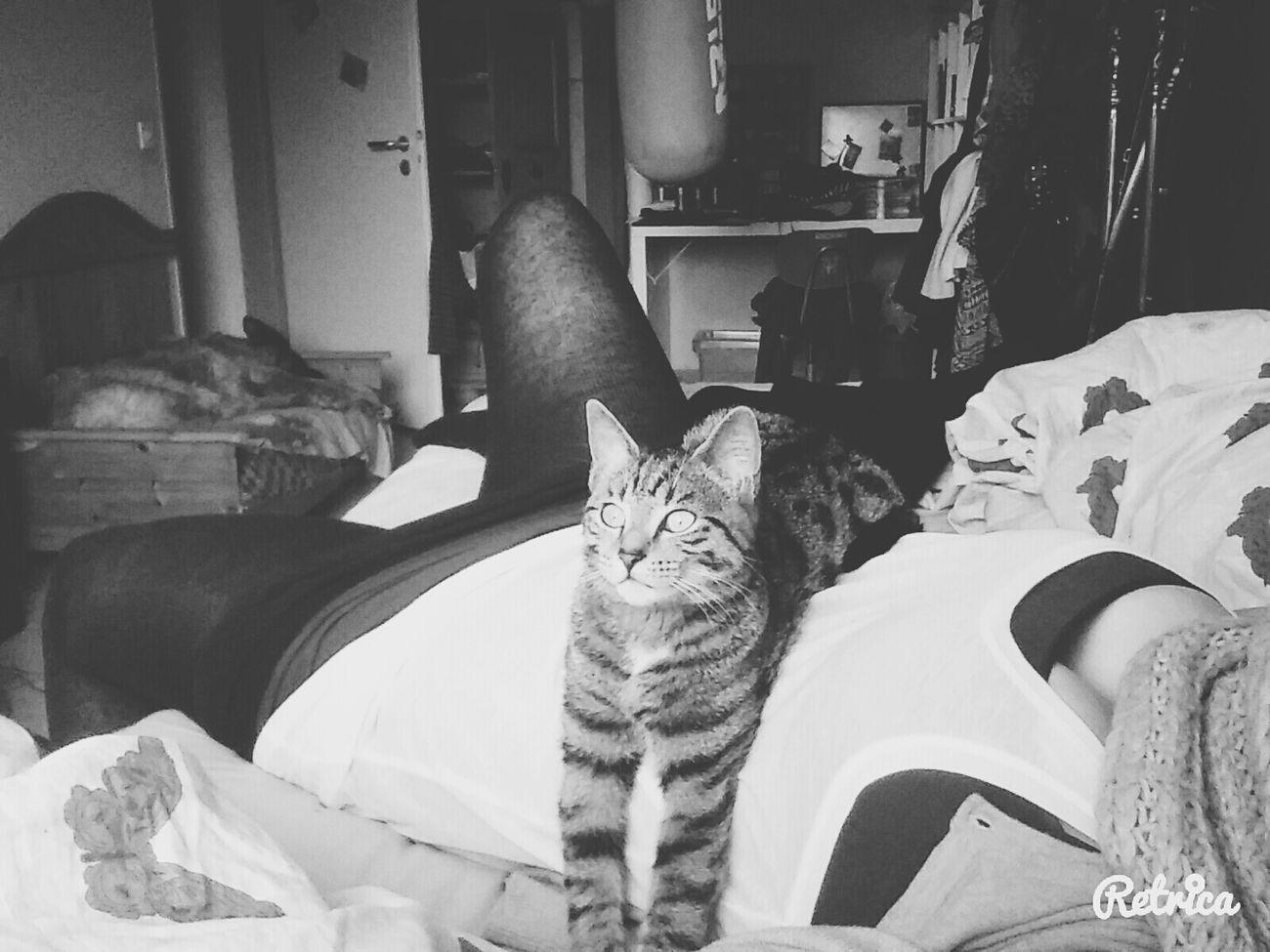 I am the worst nightmare... - ILoveYou.♡ Cat♡