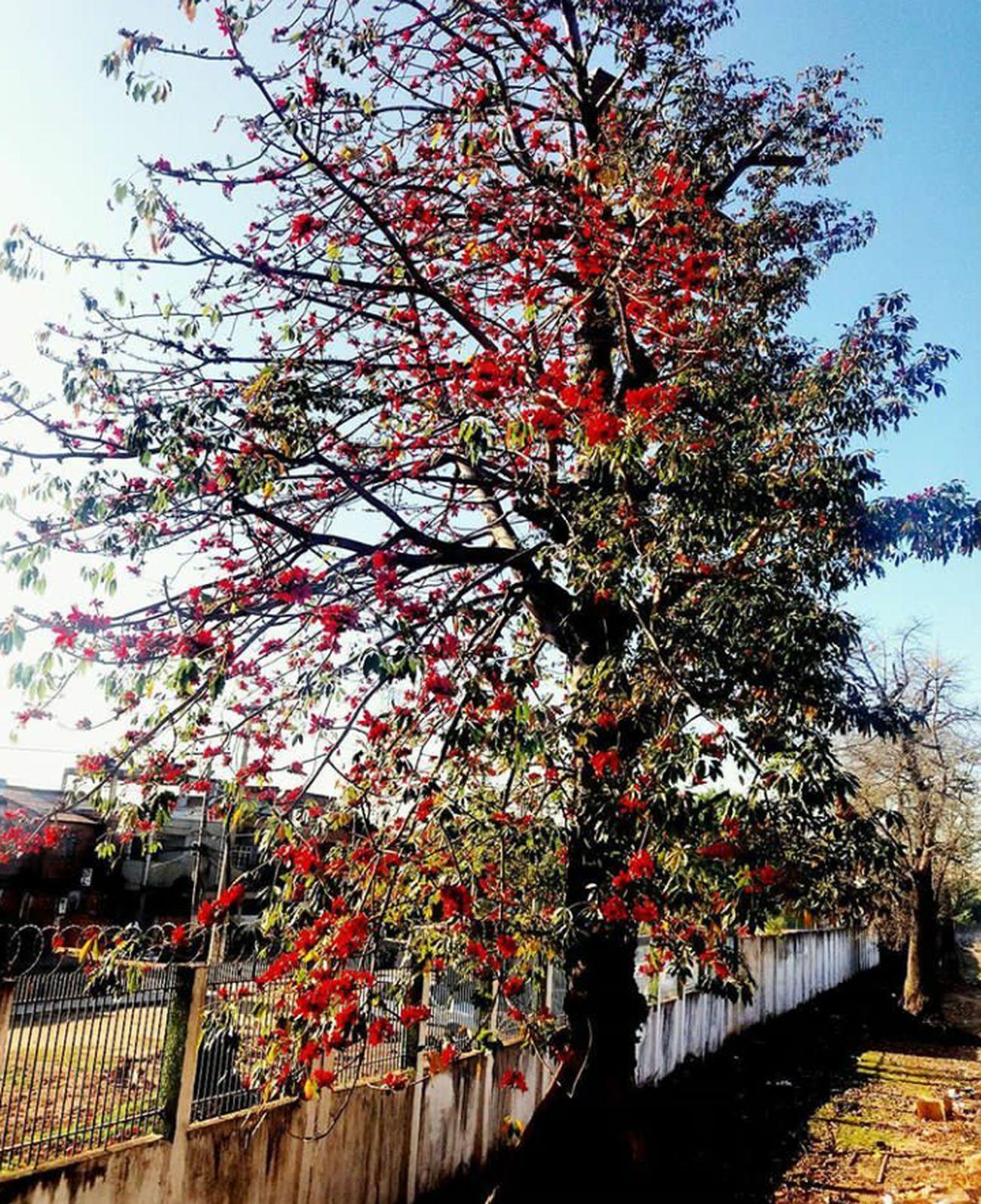Springcolors Springtime Spring