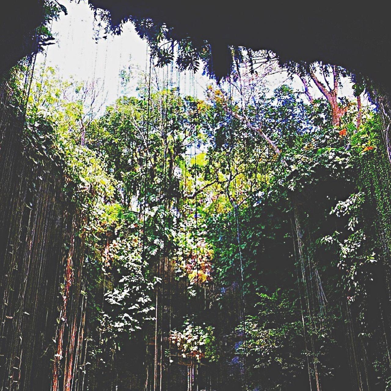 Vacation memory... Cenote Ik Kil Cenote Cenotes Ik Kil Mexico Yúcatan Yucatan Mexico Mayan Riviera Vaction Holiday Trip Chichenitza Chichen-Itzá Chichen Itza