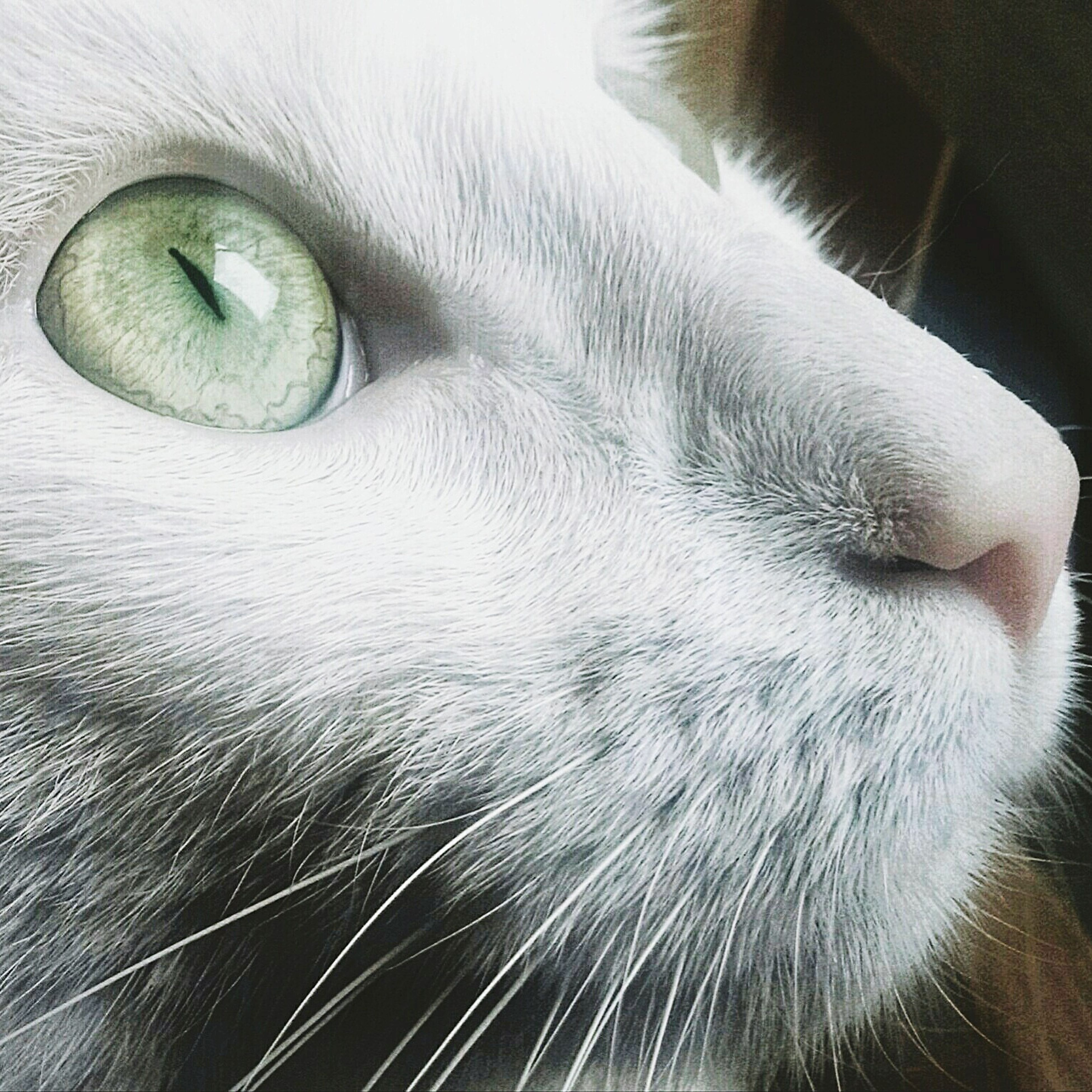 one animal, animal themes, pets, close-up, domestic animals, cat, domestic cat, animal head, mammal, whisker, animal body part, feline, animal hair, animal eye, indoors, part of, white color, no people, portrait, detail
