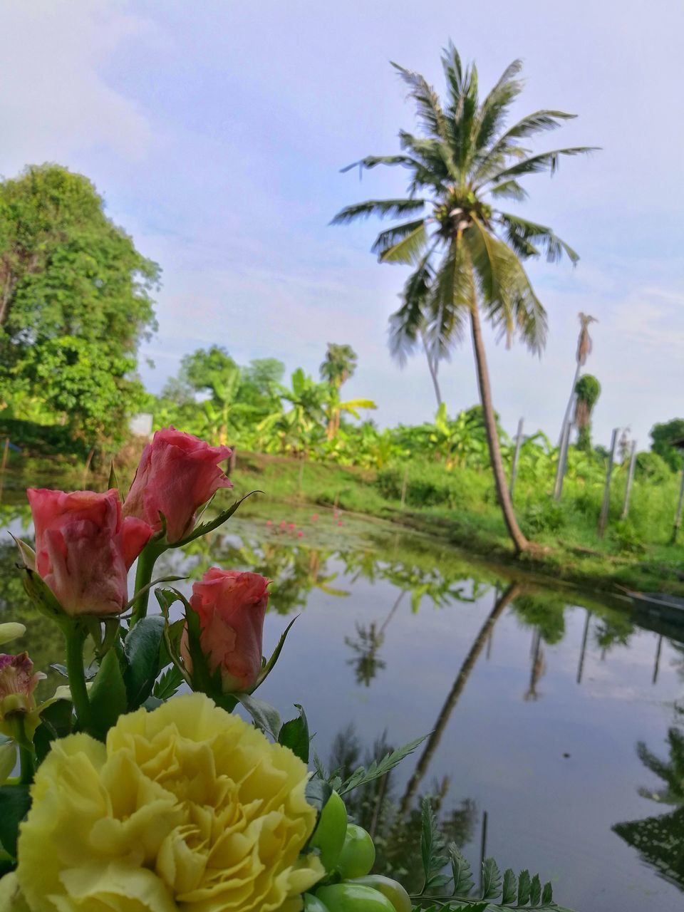 flower, beauty in nature, nature, petal, fragility, no people, growth, freshness, flower head, palm tree, tranquility, plant, outdoors, water, day, sky, tree, close-up