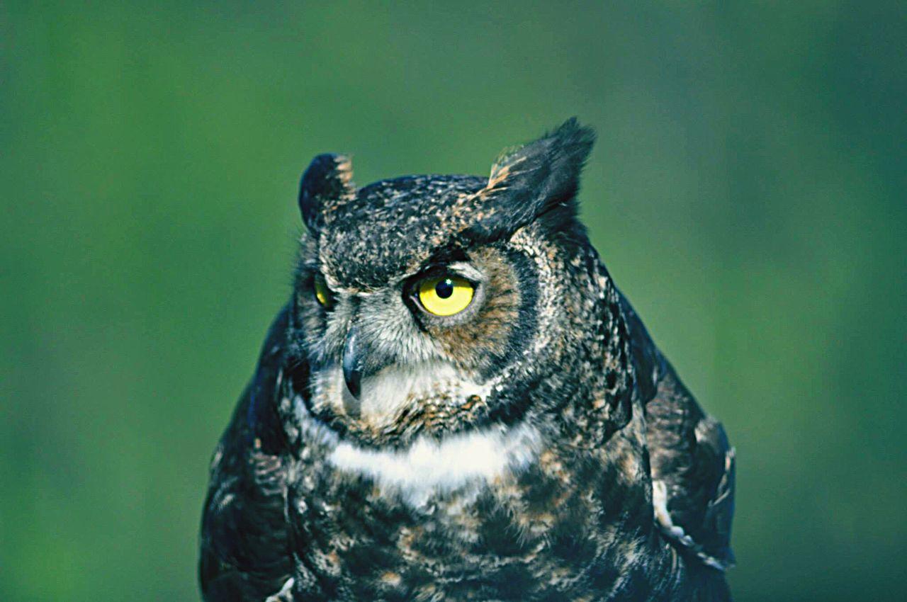 Close-Up Of Owl Outdoors