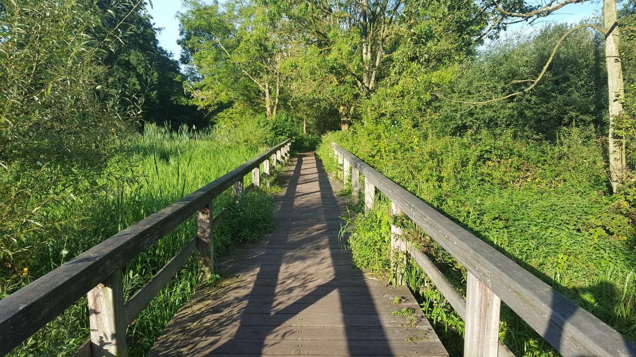 Münster Impressionen Wienburgpark Steg Grün Natur Münster Brücke Nofilter