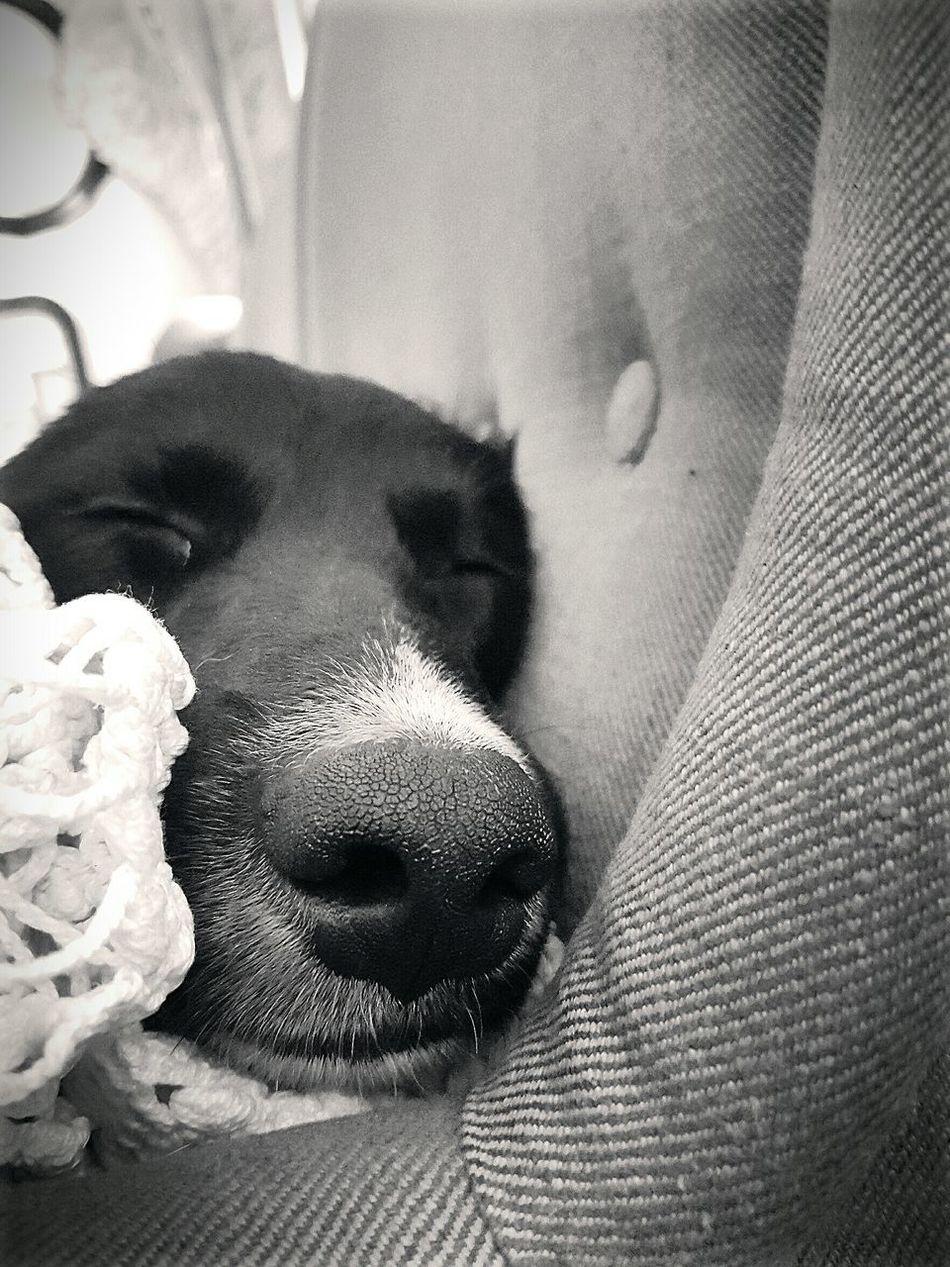I Love My Dog *.* ^^
