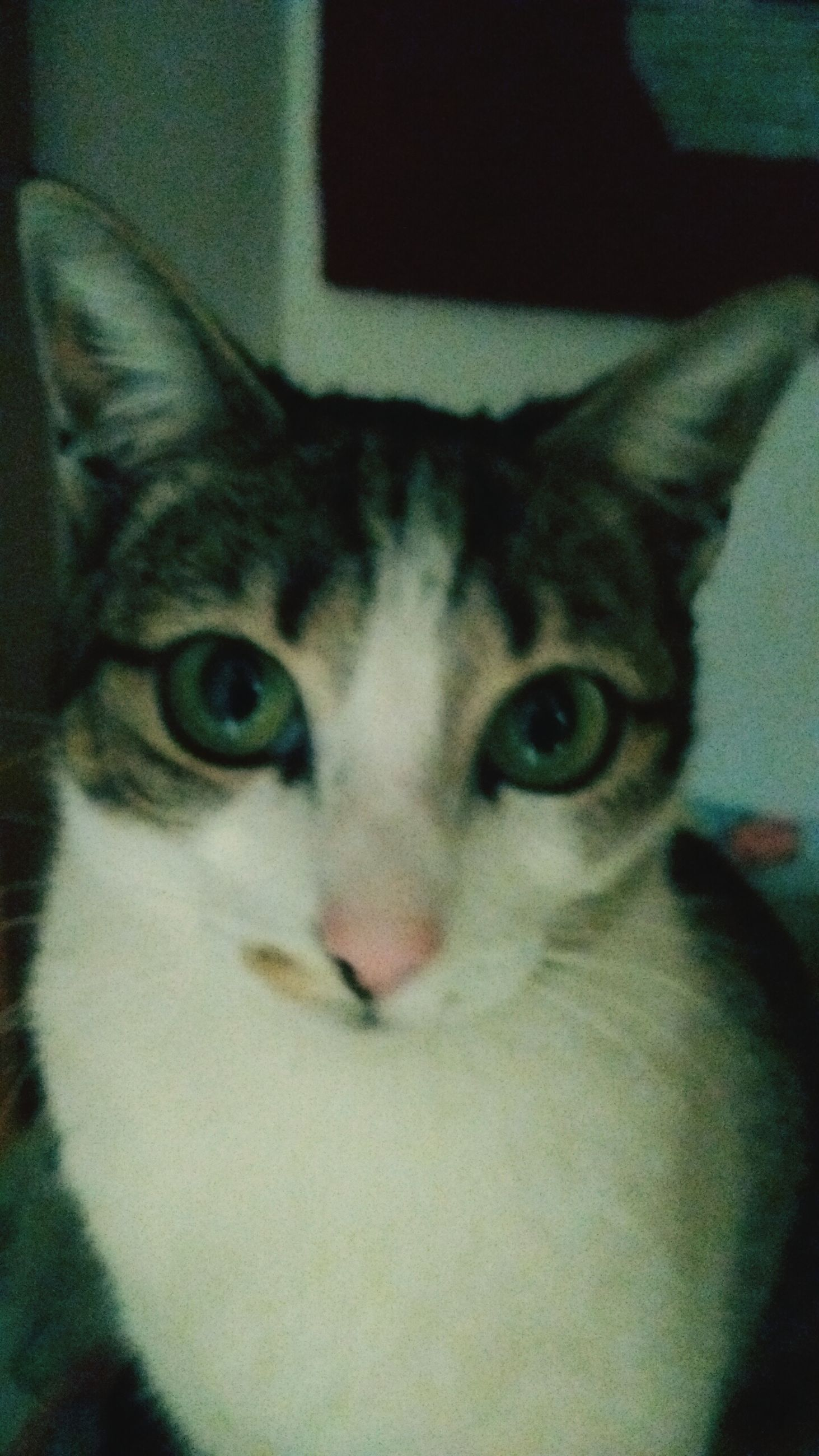 Meow First Eyeem Photo