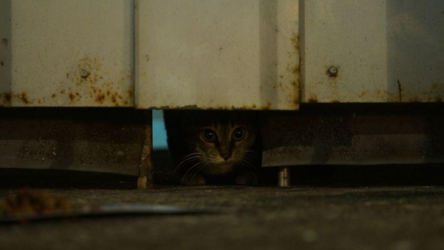 Cats 🐱 Cat Photography Cats Cats Of EyeEm Chat Gato Meow Stray Cat 猫 Neko Cat 貓
